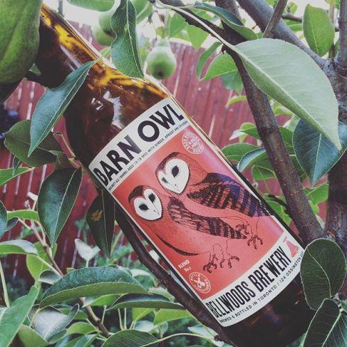 Barn Owl Blend No.1